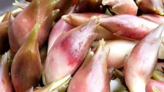 『ミョウガ』は、なんで夏バテに効くの? | 夏バテに効く食材!